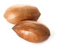 Pecan nuts in closeup Stock Images