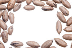 Pecan nuts frame Royalty Free Stock Images