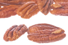 Pecan Nuts Isolated Stock Photo