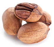 Pecan nuts. Royalty Free Stock Image