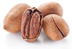 Pecan nuts. Stock Image