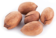 Pecan nuts. Royalty Free Stock Photography