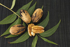 Pecan nuts with leaves Stock Image