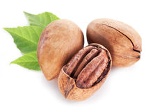 Pecan nuts with leaves. Stock Images