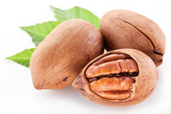 Pecan nuts with leaves. Royalty Free Stock Photo
