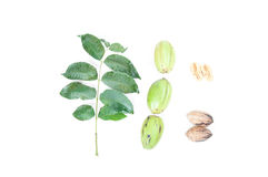 Pecan nuts with leaves on white background Royalty Free Stock Photos