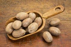 Pecan nuts in rustic scoop Stock Photo