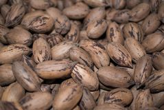 Pecan nuts after the sorting and harvest royalty free stock image