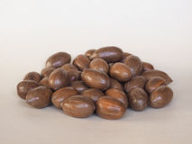 Pecan nuts uncracked Stock Image