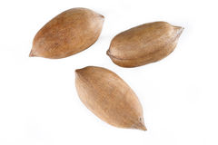 Pecan nuts on white Royalty Free Stock Images