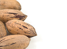 Pecan nuts on white background. Royalty Free Stock Photos