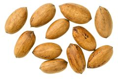Pecan top view. Pecan  nut  isolated on a white background Royalty Free Stock Photos