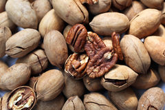 Pecan Royalty Free Stock Images