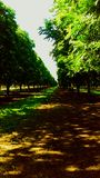 A Pecan Tree Orchard Row. A large Texas pecan tree orchard row in the summer Stock Images