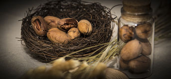Pecan. United States nuts, Pecans, United States Pecan, casual food, nuts Royalty Free Stock Photo