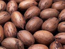 Pecans. Color photo of several pecans in the shell Royalty Free Stock Photos