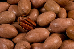 Pecans. In shell texture background royalty free stock photo
