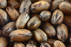 Pecans Royalty Free Stock Image