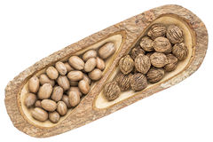 Pecans and black walnuts in wooden tray Stock Images