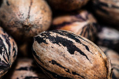 Pecans without husk Royalty Free Stock Photo