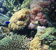 Peces marinos fotografía de archivo