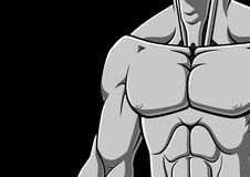 Pecho muscular Foto de archivo libre de regalías