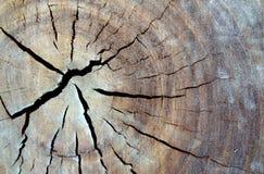 Peck de maderas foto de archivo
