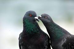 Peck sulla guancica Fotografie Stock