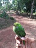 Pecker древесной зелени Стоковая Фотография RF