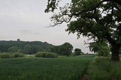 Peckforton城堡看法在砂岩足迹内的,在彻斯特 免版税库存图片