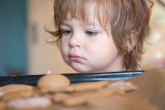 Peckish kid. Peckish girl looking at cakes Royalty Free Stock Photography