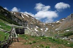 Pecora-pieghi in Romania Immagine Stock Libera da Diritti