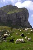 Pecore 10 Fotografie Stock Libere da Diritti