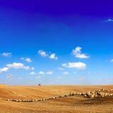 Pecore al campo fotografia stock libera da diritti