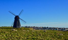 Pecore al mulino di Rottingdean, Sussex orientale, Regno Unito Immagini Stock Libere da Diritti