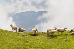 Pecore al prato Immagini Stock Libere da Diritti