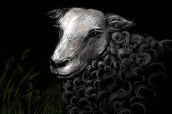 Pecore alla notte Fotografia Stock