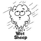 Pecore bagnate Fotografia Stock Libera da Diritti