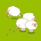 Pecore bianche che pascono su un prato verde Immagini Stock