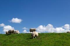 Pecore bianche sopra il cielo Fotografie Stock Libere da Diritti