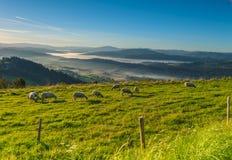 Pecore che pascolano su un prato in montagne Fotografie Stock Libere da Diritti