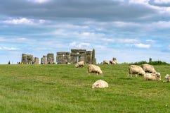 Pecore che pascono a Stonehenge nella pianura di Salisbury Immagini Stock