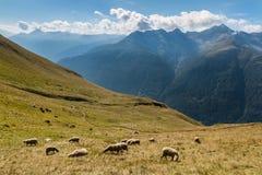 Pecore che pascono sul pendio in alpi austriache Fotografia Stock Libera da Diritti