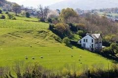 Pecore che pascono sul terreno coltivabile del pascolo del pendio di collina Fotografie Stock