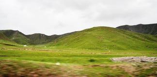 Pecore che pascono sulla montagna Fotografia Stock Libera da Diritti