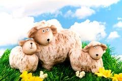 Pecore con gli agnelli Immagine Stock