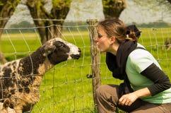 Pecore curiose e una ragazza Immagine Stock