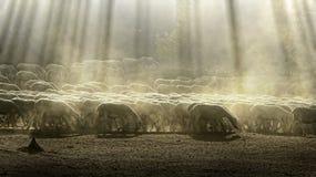 Pecore del gregge Immagine Stock Libera da Diritti