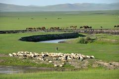 Pecore del pascolo della riva del fiume delle tribù di Khan Mongol dell'orda dorata di Mergel, cavalli, bestiame Fotografia Stock Libera da Diritti