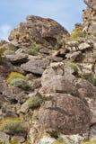 Pecore di Bighorn del deserto nel deserto di Anza Borrego. Immagine Stock
